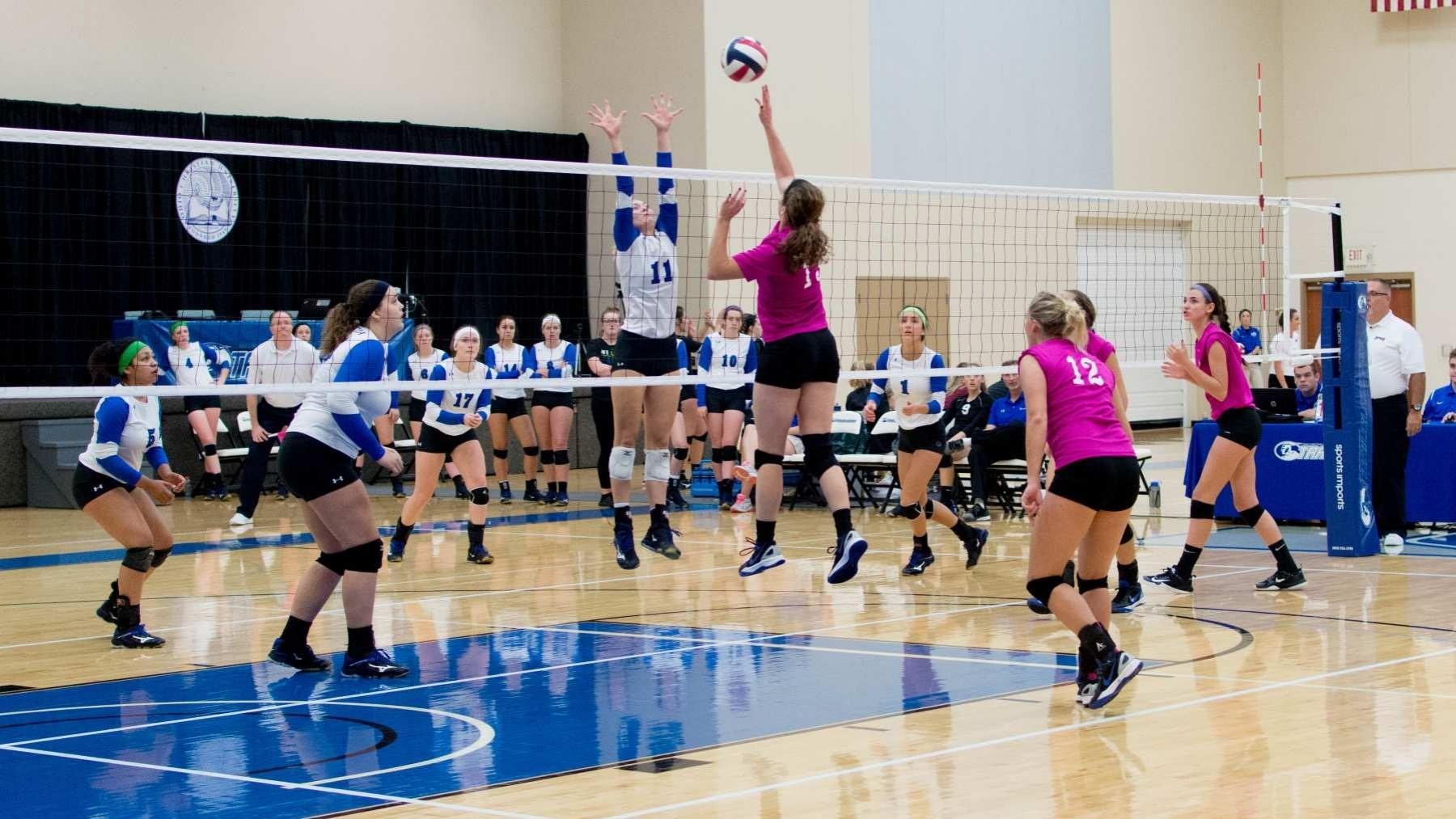 Lady Trailblazers Face Golden Bears On Dig Pink Night